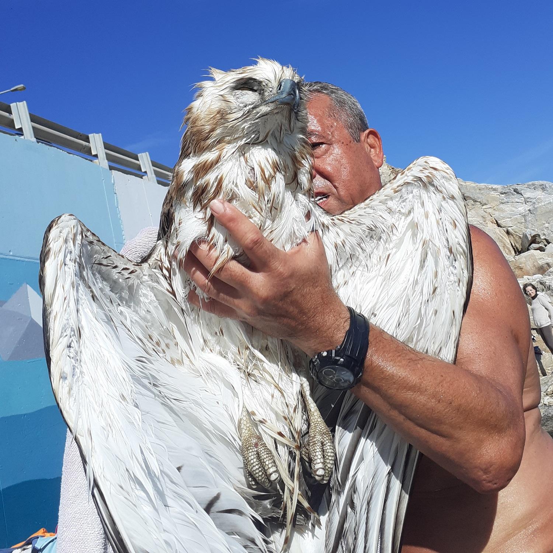 Κρήτη: Καρέ καρέ η διάσωση πετρογέρακα από τα παγωμένα νερά