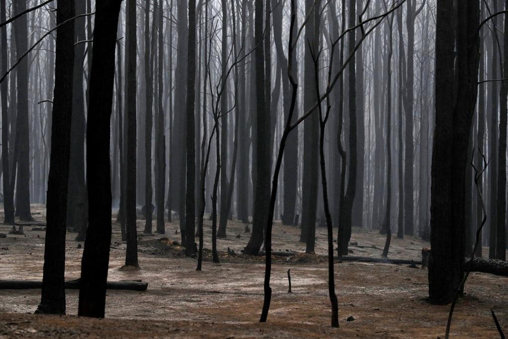 Μαίνονται οι πυρκαγιές στην Αυστραλία - Ανυπολόγιστη καταστροφή