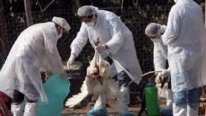 Koροναϊός - Χαλκίδα: Στα 18 έφτασαν τα κρούσματα κορωνοϊού σε επιχείρηση που εργάζονται αλλοδαποί