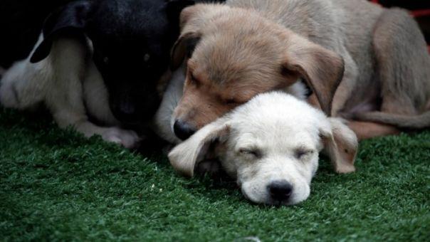 Ο Δήμος Θεσσαλονίκης ενημερώνει για τα αδέσποτα σκυλιά στο κέντρο της πόλης