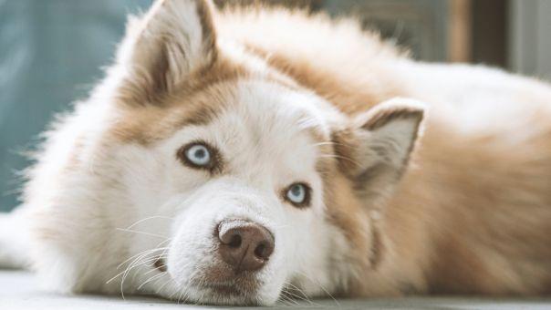 Έσεξ: Σκύλος - «εμπρηστής» άναψε το φούρνο μικροκυμάτων και έβαλε φωτιά