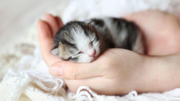 Ταϊλάνδη: Νεογέννητο γατάκι με δύο κεφάλια δίνει μάχη να κρατηθεί στη ζωή(pic)