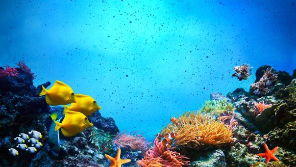 ΟΗΕ: Το οξυγόνο μειώνεται σε όλο και περισσότερες θαλάσσιες περιοχές