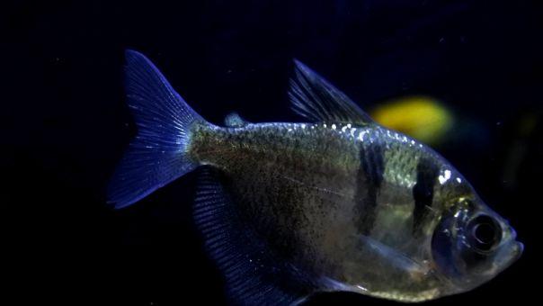 Το αλλόκοτο ψάρι «Πικάσο» που δημοσίευσε Ιάπωνας και έγινε viral
