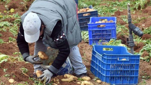 Παρατείνεται η άδεια παραμονής μετακλητών εργατών γης