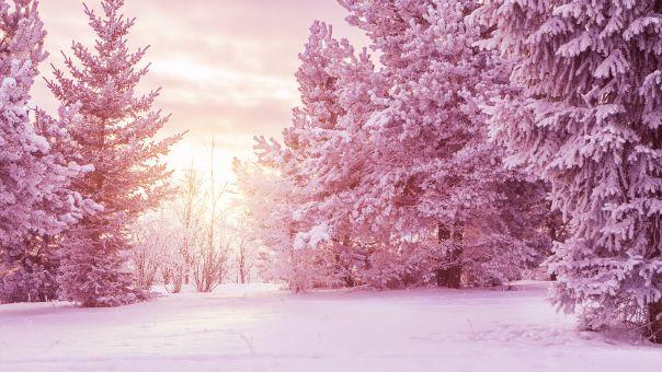Oι Άλπεις άλλαξαν χρώμα: Το παράξενο φαινόμενο «ροζ χιόνι» προβληματίζει τους ειδικούς