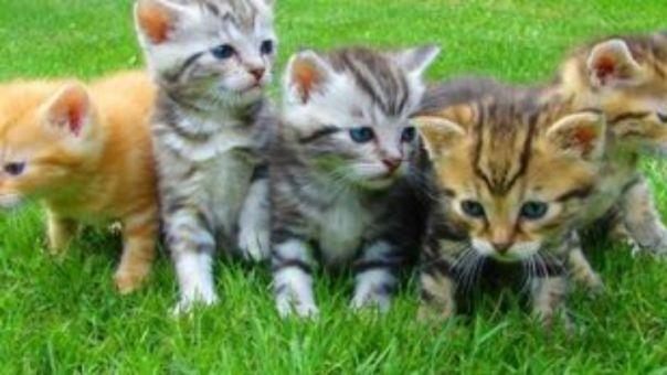 Δήμος Αθηναίων: Νέο πρόγραμμα για αδέσποτα – Τοποθετούνται σπιτάκια για γάτες σε γειτονιές της πόλης