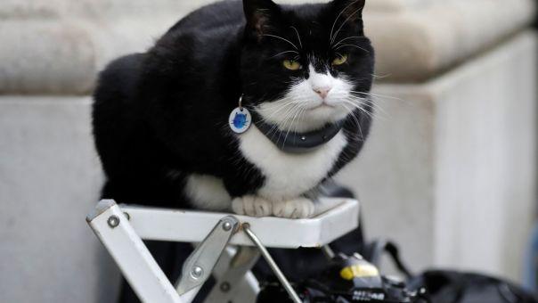 Βγαίνει στη σύνταξη ο γάτος του Φόρεϊν Όφις με τους 100.000 ακολούθους στο Twitter