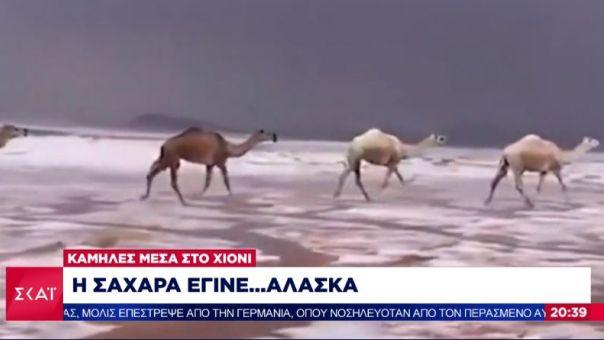 Η Σακχάρα έγινε...Αλάσκα: Στα λευκά ντύθηκε η έρημος- Καμήλες τρέχουν πάνω στο χιόνι