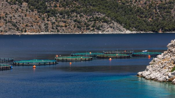 Η ελληνική ιχθυοκαλλιέργεια ηγέτιδα στις εξαγωγές