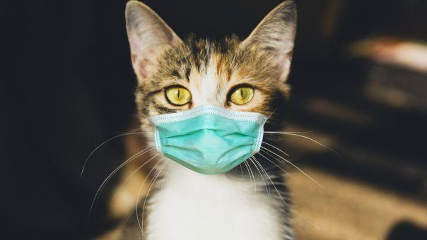 Κορωνοϊός: Η βρετανική μετάλλαξη εντοπίστηκε για πρώτη φορά σε σκύλους και γάτες