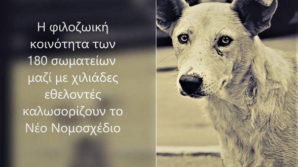 Ζώα συντροφιάς: 180 σωματεία στηρίζουν το νέο νομοσχέδιο και εξηγούν γιατί