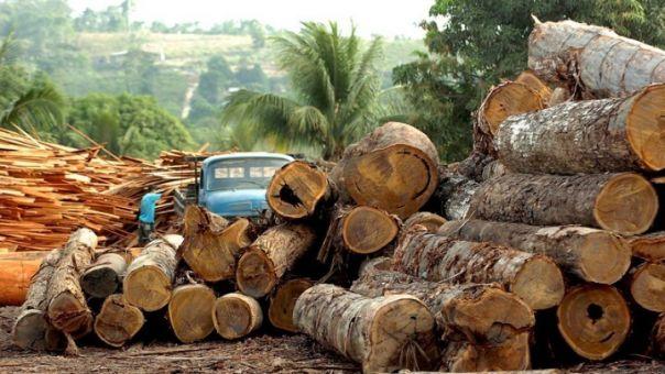 WWF: Αποψίλωση δασών που συνδέεται με εισαγωγές- Η ΕΕ στη 2η θέση παγκοσμίως μετά την Κίνα