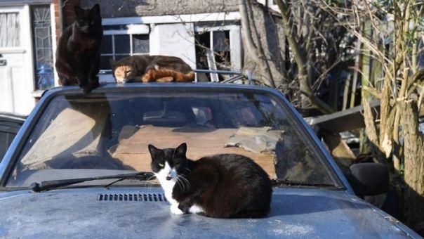 Θα απαγορεύεται να στειρώνουμε αδέσποτες γάτες (ή σκύλους)