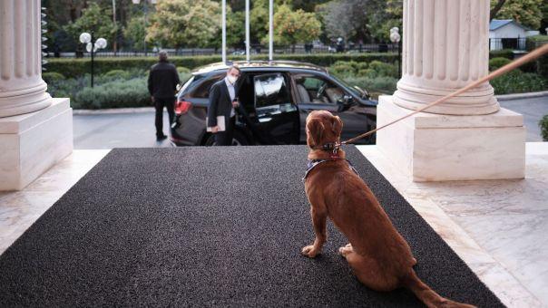 Το Μέγαρο Μαξίμου υιοθέτησε για πρώτη φορά αδέσποτο σκύλο (φωτό)