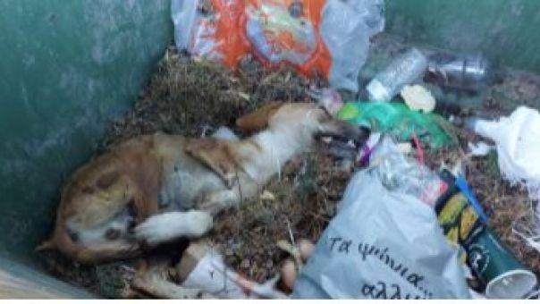 Εγκατέλειψαν τραυματισμένο σκυλάκι μέσα σε κάδο σκουπιδιών στη Σάμο