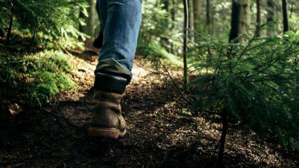 Θησαυρό 2.500 ετών βρήκε τυχαία στο δάσος περιπατητής στη Σουηδία