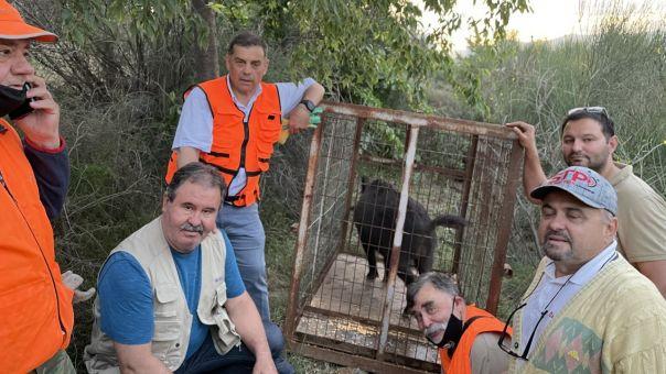 Επιχείρηση αγριογούρουνο στη Θεσσαλονίκη: Πώς πιάστηκε το συμπαθές τετράποδο