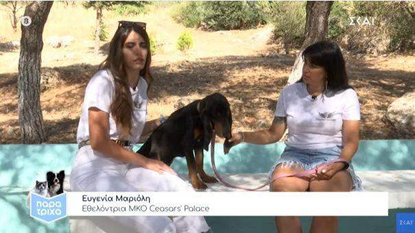 Παρά Τρίχα: Οι εθελοντές στο Σχίνο Κορινθίας σώζουν πυρόπληκτα ζώα (vid)