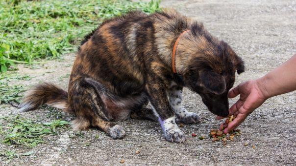 Ικανοποίηση ζωοφιλικών σωματείων για την ίδρυση καταφύγιων αδέσποτων ζώων