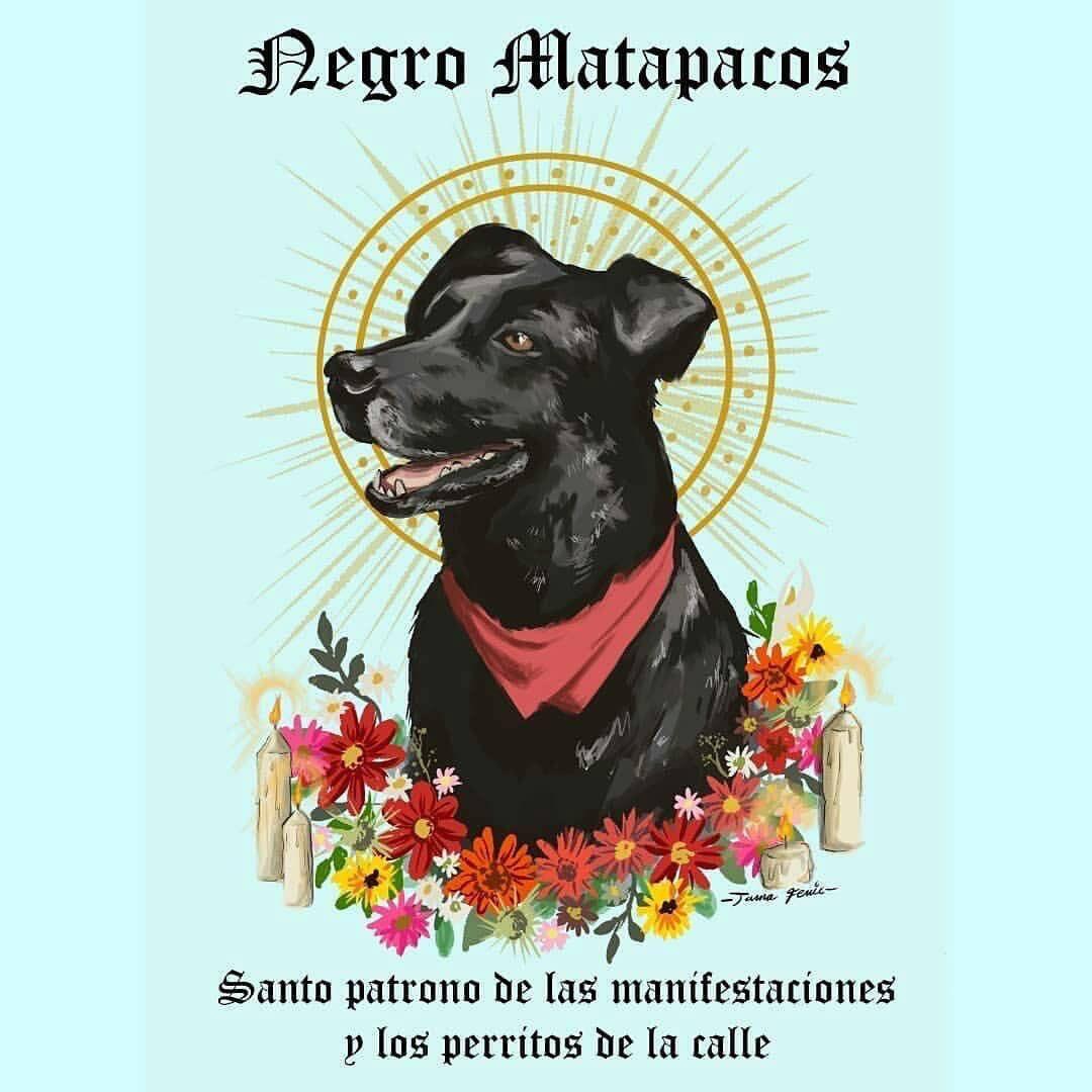 twitter dog - O «Λουκάνικος» της Χιλής: Ο σκύλος αντιεξουσιαστής που έγινε σύμβολο